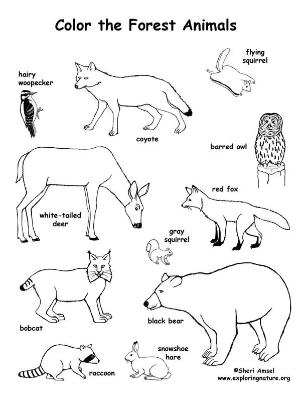 5300 Rainforest Animals Coloring Pages Preschool For Free