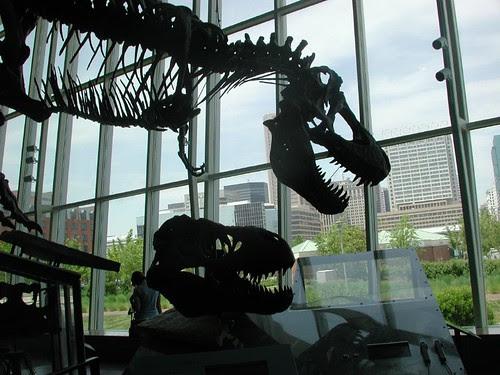 tyrannosaurus rex - Peck's
