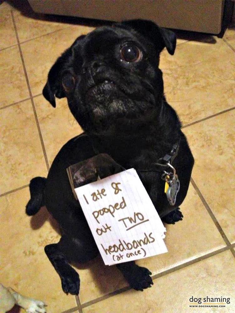 dog shaming 25 32 Hillarious Public Shaming of Dogs