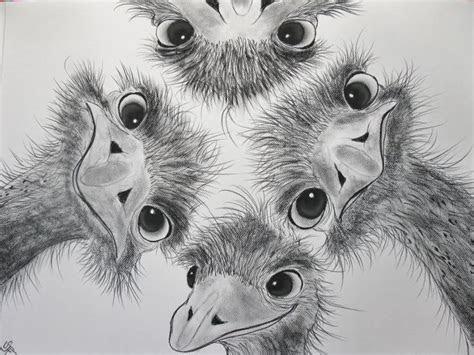 animal drawings  charcoal google search art design