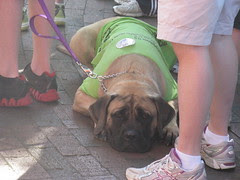 Dog with MS Walk t-shirt