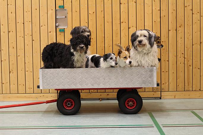 عربة اليكسا الكلاب