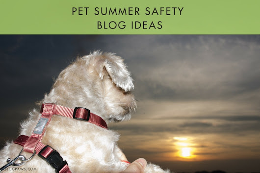 BlogPaws Wordless Wednesday Blog Hop Pets and Summer - BlogPaws
