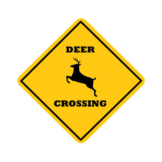 Dangerous Season for Car-Deer Crashes