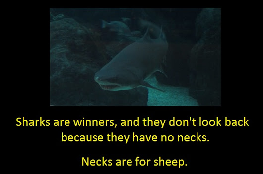 Sharks and Sheep
