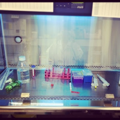 Everyday I cell culturing~  (Taken with instagram)