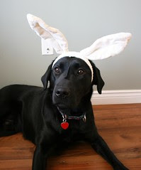 Augus (Easter Bunny)