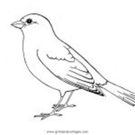 gratis malvorlagen eisvogel - kostenlose malvorlagen ideen