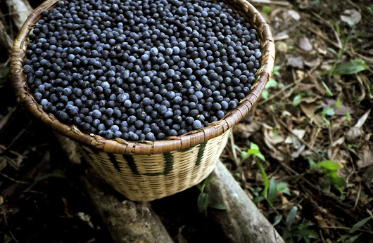 Antioxidants and Acai: What They Are and What They Do