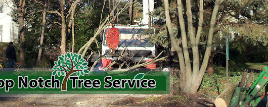 Top Notch Tree Removal Services South Jersey