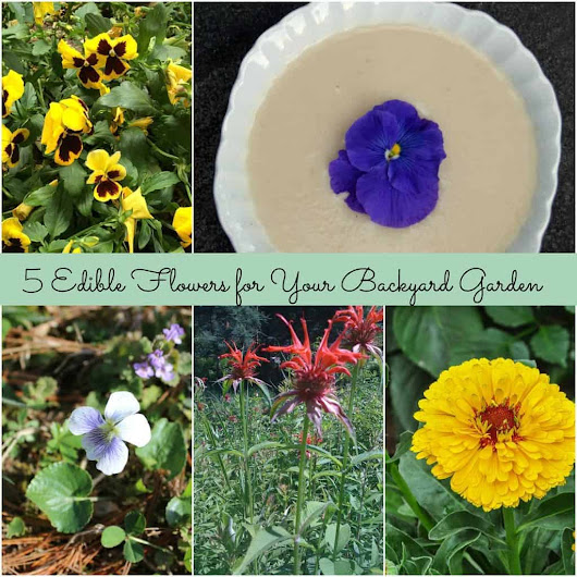 5 Edible Flowers for Your Backyard Garden