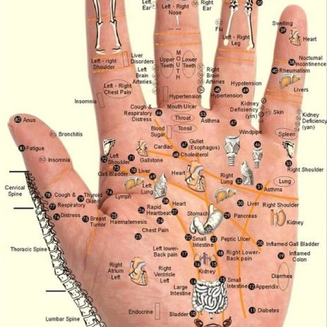 Acupuncture points  For the wellness studio  Pinterest