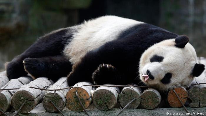 Panda (Foto: dpa).