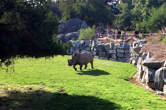 Sneak Peek: Chaffee Zoo African Adventure - photo tour & grand opening news