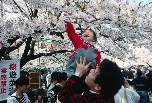 HANAMI: The Japanese CHERRY BLOSSOM Viewing Festival