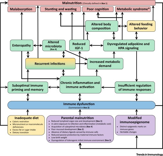 Immune Dysfunction as a Cause and Consequence of Malnutrition: Trends in Immunology