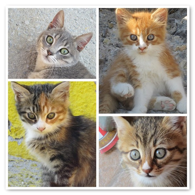 Greek kittens