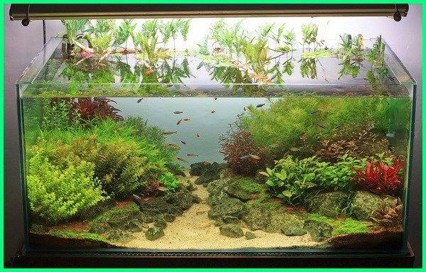 Tanaman Aquascape Tanpa Co2 Dan Pupuk - Aquascape