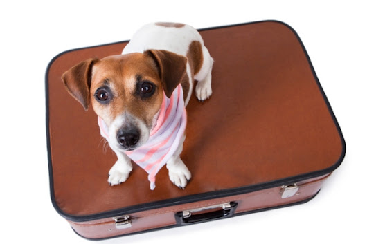 Delta to Stop Accepting Pets as Checked Baggage