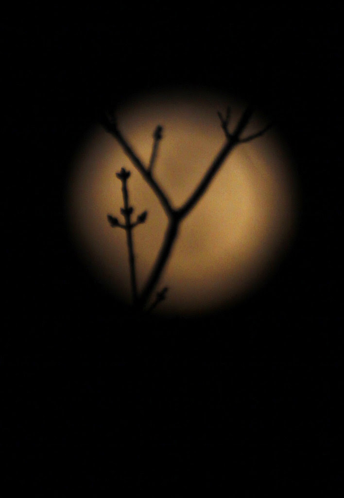 moontwigs