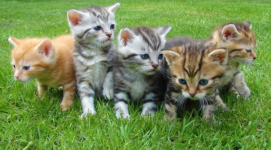 Top Tips for New Cat Owners