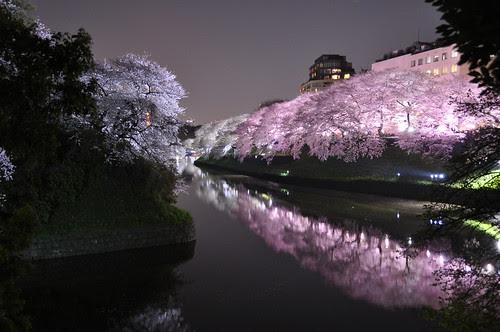 Sakura light-up at Chidoriga-fuchi in Tokyo 千鳥ヶ淵 by Marufish