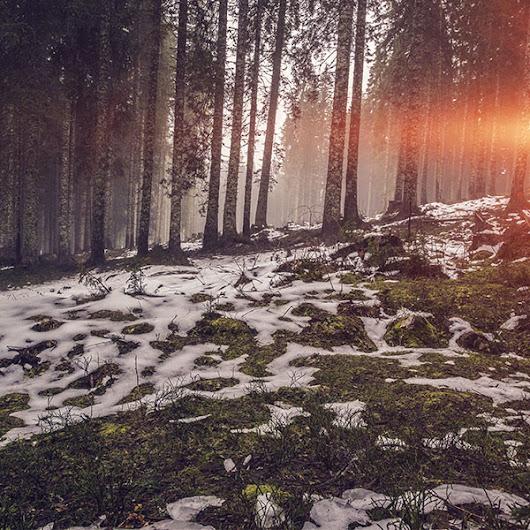 mq53-mountain-snow-woods-nature-flare