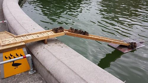 UW_duck_ramp