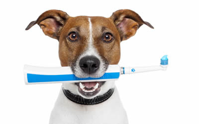October is Dental Month | Ashfield House Vets