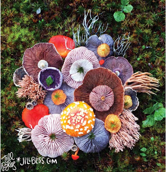 Beautiful Photography of Wild-Foraged Mushrooms