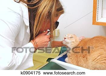 Stock Image - veterinarian.  fotosearch - search  stock photos,  pictures, images,  and photo clipart