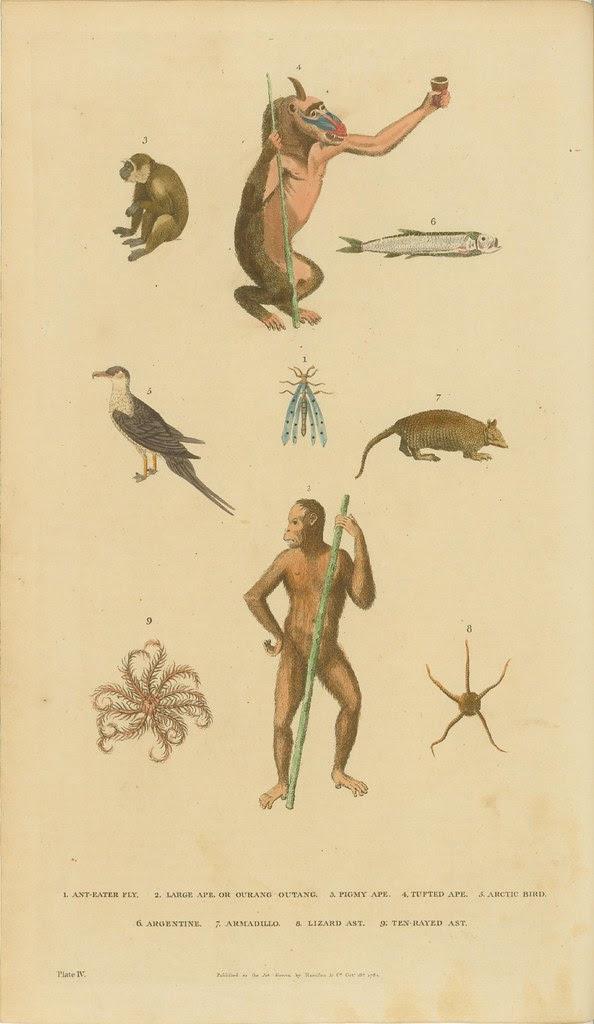 Monkeys, bird, fish, armadillo, fly, and asts - hand-coloured engravings