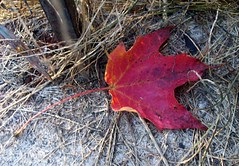 Leaf_10609b