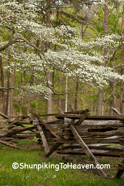 Dogwood and Split Rail Fence, Mill Springs Battlefield, Pulaski County, Kentucky