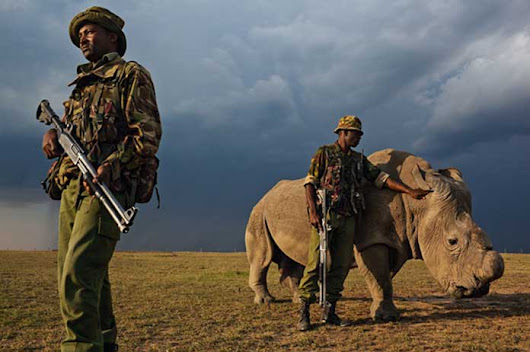 To Protect Rhinos, This National Park Shoots Poachers — 50 People Killed So Far | CSGlobe