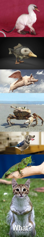 Foto foto hewan lucu terbaik