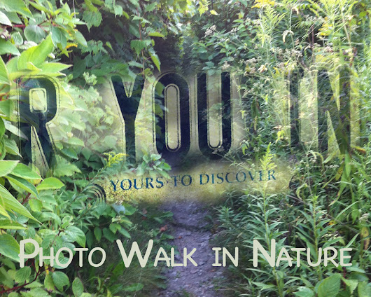 Walk on the wild side - with your phone