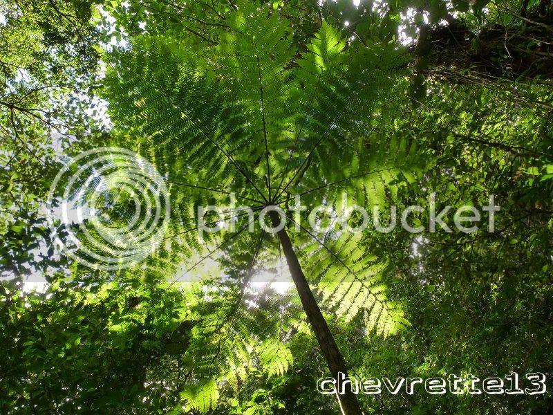Les chutes du Carbet (3)....Guadeloupe
