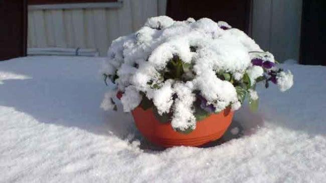 Snø i mai (Foto: mms-foto)