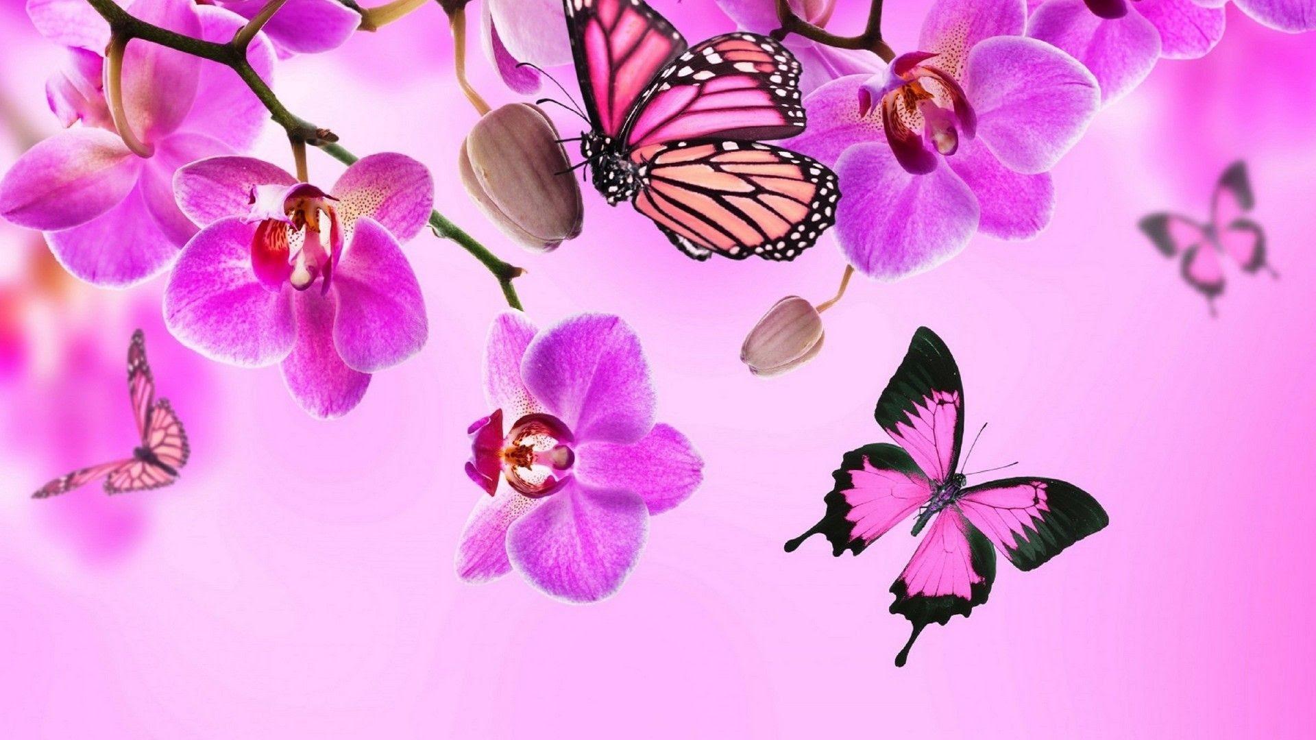 Pink Butterflies Wallpaper (69+ images)