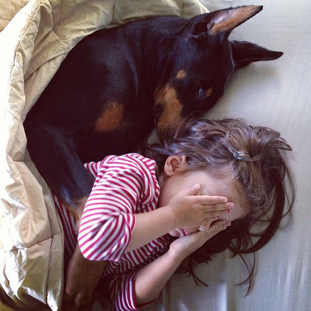 Они спят вместе девочка, доберман, дружба