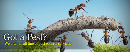 5 Reasons to Hire Pointe Pest Control -