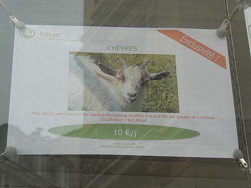 chèvres.jpg