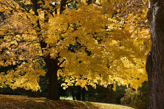 "Announcing ""Fall Colors"" - Our November 2017 Photo Contest - Photo Contests 