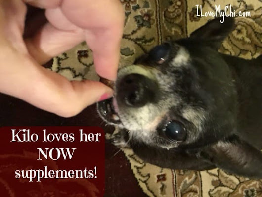 Help for Your Chubby Chi #NOWPetsSweeps | I Love My Chi