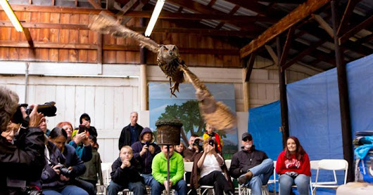 Soar Into Winter Raptor Fest & More Fun Events In The Lake George Region: May 18-20
