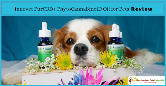 Innovet PurCBD+ PhytoCannaBinoiD Oil for Pets Review: Finding the Best CBD Oil for Your Dog or Cat ~ Raising Your Pets Naturally with Tonya Wilhelm