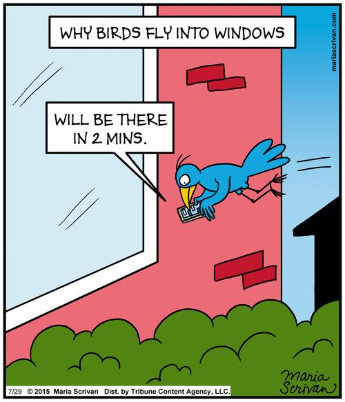 Image result for bird hitting wall cartoon