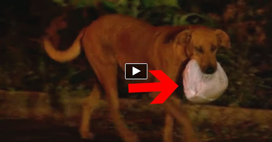 This Poor Dog Traveled 4 Miles To Get THIS Bag. What's Inside Brought Tears To My Eyes.