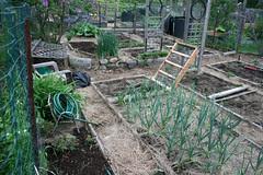 spring garden plot 015